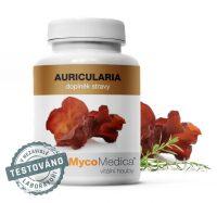 Auricularia – Bolcovitka chlupatá – Mycomedica